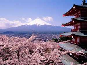 Japanese Cherry Blossoms on mount Fuji